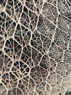 Cactus fiber
