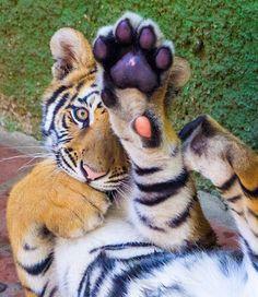 High five!!