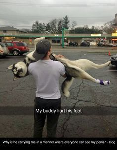 #3 When your husky hurt his foot