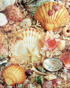 A basket of seashells.