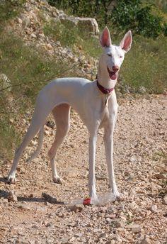 Safira de Escalona - I don't know Spanish, but I like the dog.