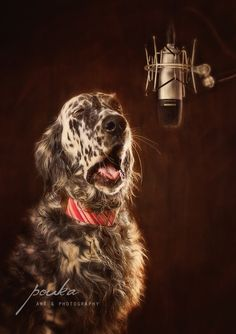 """The Diva"" An English Setter singing. Pouka Art & Photography. www.pouka.com"