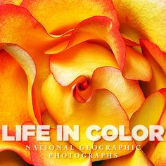 Life In Color | National Geographic Store