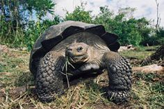Galapagos Cruises | Since 1990, Ecoventura has been leading the way in expedition cruising in the Galapagos Islands. Our first-class fleet includes cruise ships and yacht charters, all unmatched for comfort and safety. Book your Galapagos tour with us today! Call us at 1800