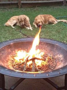 this dog breathes fire