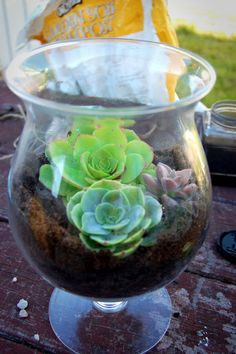 Danya Collyer: Home : DIY Terrariums