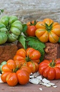 Apples of Love: tomatoes from the Colonial Wmburg gardens