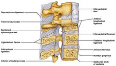 Lumbar traction has been shown to increase inter-vertebral space and ease pain wit just 26% body weight