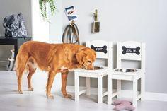 DIY Hundenapf: Futterstation selber bauen