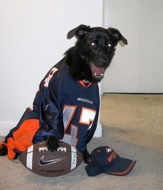 san francisco 56def 8f911 89 Broncos Best Friends images in 2013 | Broncos, Denver ...