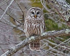 Animal Photography Owl in a tree print fall colors by NewLeafPics, $25.00
