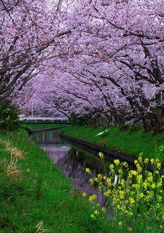 Sakura Garden - mohamad masoumi - Google+