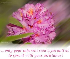 ...only your inherent #seed is permitted, to #sprout with your assistance !