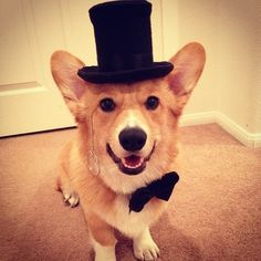 Reason 5,207 why Corgis are awesome