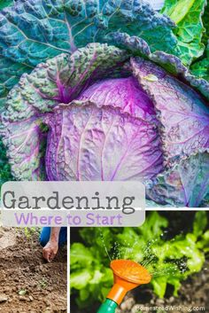 How to start gardening. New to Gardening. Beginner gardener. Beginning gardening. Are you needing more info for how to start a garden? You have come to the right place. I compiled a list of 40 reads. Learning is the best place to start!