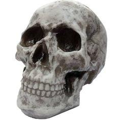 Cranio Caveira Esqueleto - Feito De Resina - Tamanho Real R$29