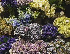 Flowers #bondibeach #australia #australiagram #bondibeachsydney #sydney #rainyday #picoftheday #pic #travel #travelingram #flower #flowers #flowermagic #flowerstagram by fe_chur http://ift.tt/1KBxVYg