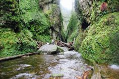 Columbia River Gorge National Scenic Area, Hood River, Oregon — by The Camangian's. The Moss covered Oneonta Gorge.