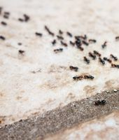 Met deze tips heb je nooit meer last van mieren
