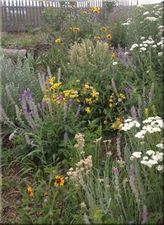 Wild About Flowers is a supplier of authentic wildflower seed mixes plugs for use in self-sustainable, waterwize gardening and landscaping. Prairie Meadows, Natural Play Spaces, Honeysuckle Vine, Indian Paintbrush, Seed Packaging, How To Attract Birds, Wildflower Seeds, Growing Seeds, Natural Garden