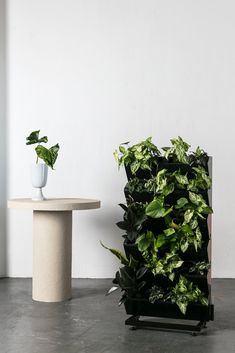 The self-watering system does the hard work for you and your plants allowing them to grow quickly and healthily.  This garden will let you know when it needs more water, each row has its own water level indicator giving you green thumbs to be jealous of. You only need to water the top corner of your garden to nourish each plant. The Vertical Garden is made up of six Vertical Planters. The planters are connected vertically and can be connected horizontally, enabling your vertical garden to… Balcony Garden, Indoor Garden, Indoor Plants, Outdoor Gardens, Garden Spaces, Vertical Garden Wall, Vertical Planter, Costa Maya, Irrigation