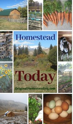 HOMESTEAD TODAY: learn how to start Creating your own HOMESTEAD TODAY by being more self reliant and self sufficient. Simple Living Skills are a phenomenal way to begin your Own Journey to the Lifestyle you want!!! Happy Homesteading♥