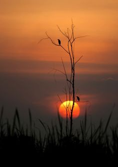 50 Most Beautiful Sunset and Sunrise Photography Beautiful Moon, Beautiful Sunrise, Beautiful World, Sunrise Photography, Nature Photography, Pictures To Paint, Nature Pictures, Sunset Silhouette, Jolie Photo