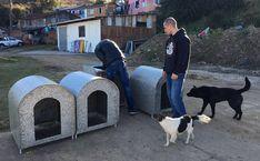Voluntários espalham casinhas para esquentar animais
