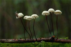 Like Angels     Von   Moonshroom