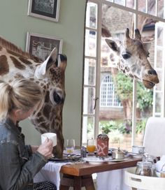 Giraffe Manor, which might be one of the most unique hotels in the world, has a resident herd of Rothschild giraffes you can't help but encounter there.