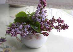 I do love lilacs...