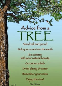 Advice from a Tree Stand tall and proud Sink your roots into the earth Be content with your natural beauty Go out on a limb Drink plenty of water Remember your roots Enjoy the view! by Ilan Shamir Nature Tree Quotes, Quotes About Trees, Advice Quotes, Nature Quotes, Spirit Guides, Good Advice, Life Lessons, Wise Words, Quotes To Live By