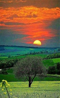 A beautiful sunset Beautiful Nature Pictures, Beautiful Nature Wallpaper, Amazing Nature, Nature Photos, Beautiful Landscapes, Beautiful World, Cool Pictures, Landscape Photography, Nature Photography