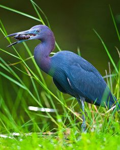 11 animales elusivamente azules e inolvidables| Ecoosfera