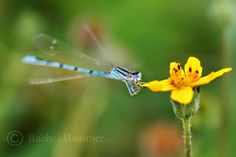 Entomophilia: Insect Photography Tips http://twofeetphoto.blogspot.com/2014/05/insect-photography-tips.html