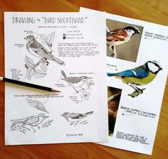 Free Download Bird Shorthand