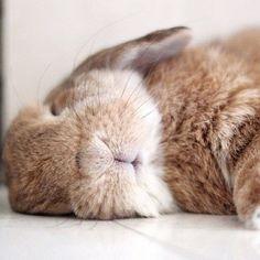 bunny nap..Soooo cute