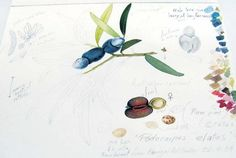 No Really, That's How I Do It - Divine Detail | American Society of Botanical Artists
