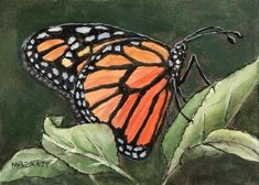 ACEO TW JUN Original Painting Monarch Butterfly insect animal leaf antenna #Impressionism