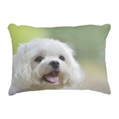 White maltese dog sticking out tongue decorative pillow