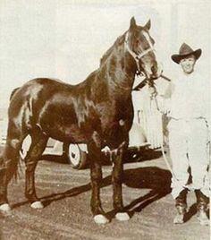 Joe Hancock- the great cow horse sire
