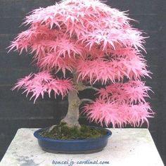 ♦♣I simply love this cute #bonsai!ᴥ● #BonsaiInspiration
