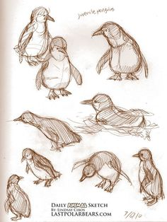 Daily Animal Sketch – Penguins – Last of the Polar Bears Bird Drawings, Art Drawings Sketches, Animal Drawings, Drawing Animals, Penguin Sketch, Bird Sketch, Penguin Drawing, Pinguin Illustration, Art Du Croquis