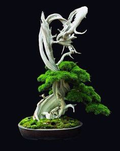 Bonsai ©by: █║ Rhèñdý Hösttâ ║█