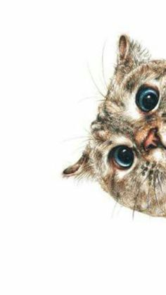 Bitch . Animals And Pets, Funny Animals, Cute Animals, I Love Cats, Cute Cats, Kitten Wallpaper, Cat Drawing, Funny Animal Pictures, Whimsical Art