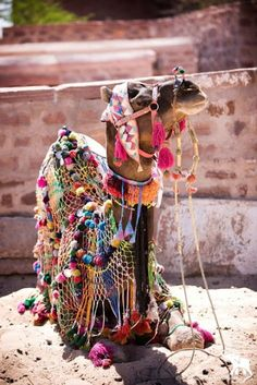 Camel flowers gone wild.   Tassels and pom poms