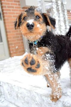Adorable puppy paws.  Big Foot.
