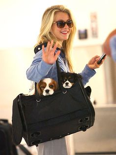 Julianne Hough touches down in Miami with pups Lexi and Harley