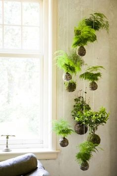 Looks like a Tillandisa mobile. :) Possible plant arrangement for living room wall. Could mount square planter boxes with draping succulents to wall, if hanging is a problem (due to wind). More