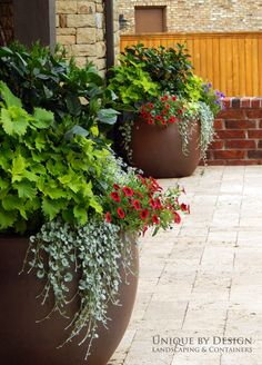 Container gardening and Pot Ideas, see the gardening pin plan number 7777485170 to growing our favorite plants in a pot. Patio Plants, Outdoor Planters, Garden Planters, Outdoor Gardens, Potted Plants, Container Flowers, Flower Planters, Container Plants, Container Gardening